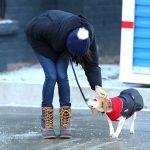 Meghan Markle walking her dog Guy in Toronto in December 2016.